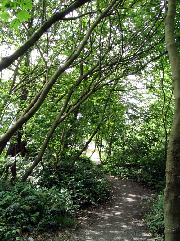 A picture of the renfrew ravine